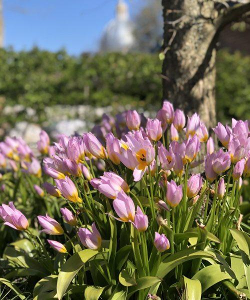 Arboretum 23 april 2021 SK (31)
