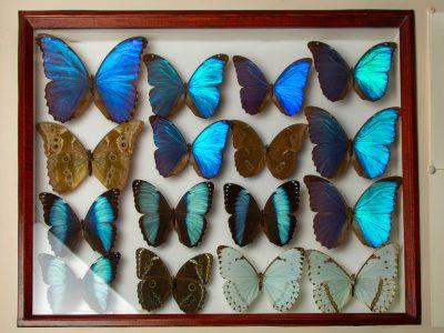 natuur vlinders 4